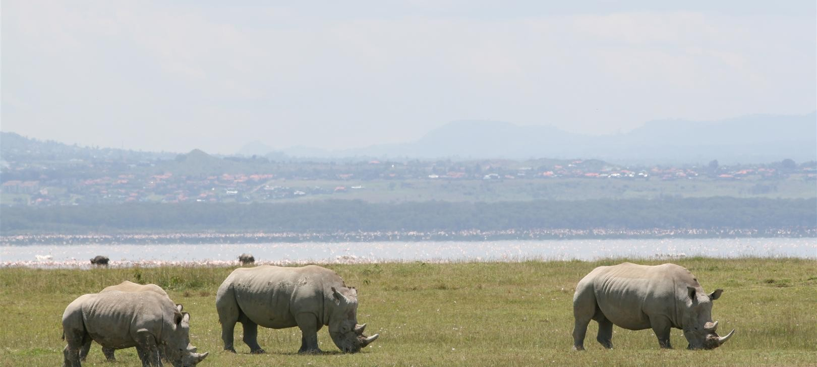 3 rhino at Nakuru (photo by Steward Shang)