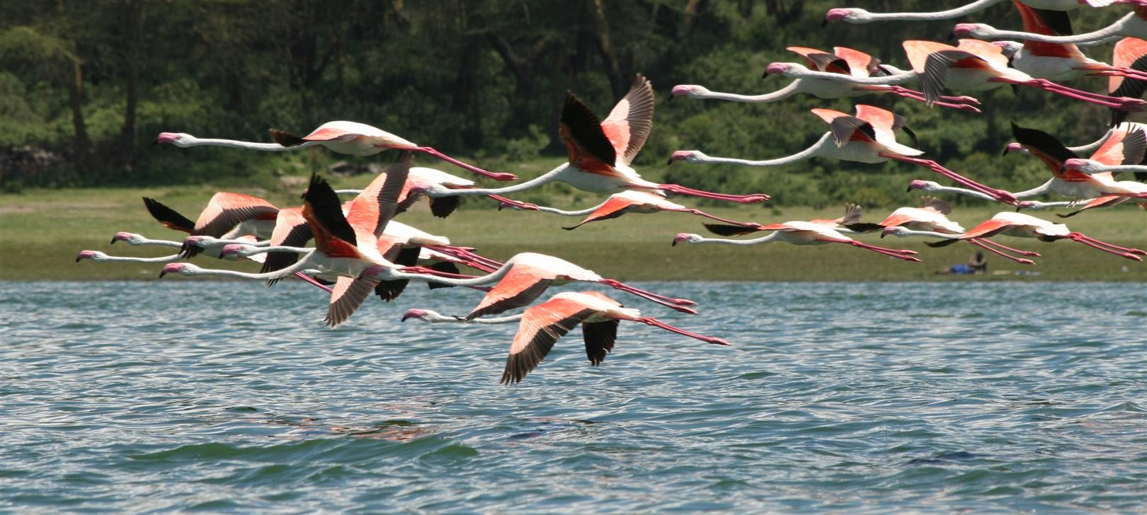 flamingos more (photo by Steward Shang)